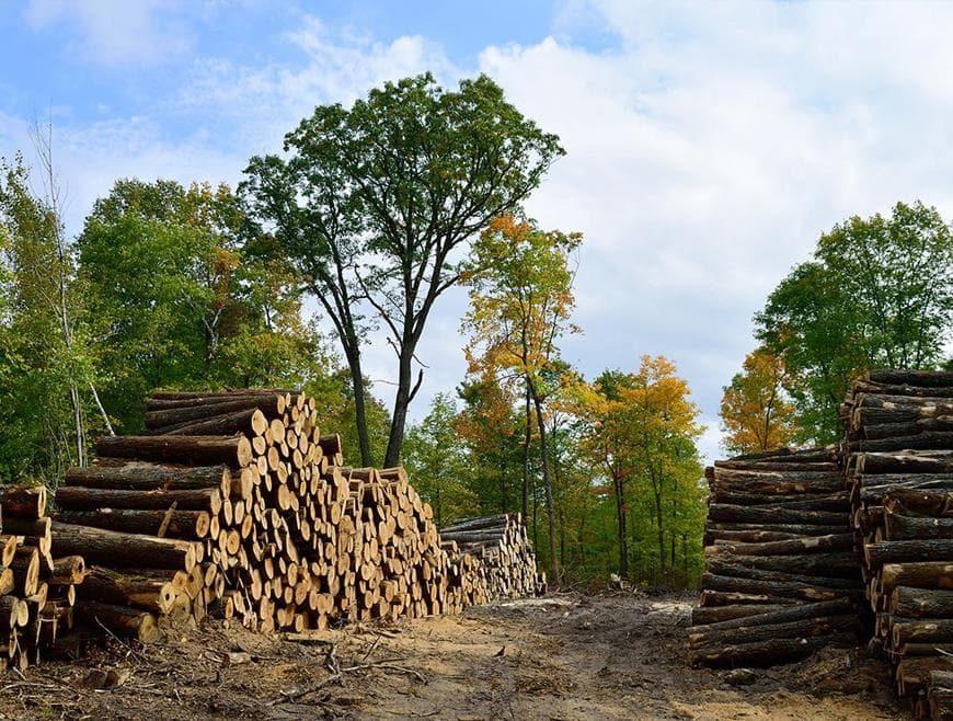 Biomasse e cogenerazione